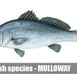 fishing boat hire melbourne mulloway